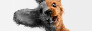 Come vedono gli animali? Mille occhi diversi nel mondo animale