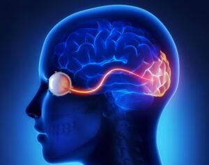 La neurite ottica o retrobulbare è l'infiammazione del nervo ottico